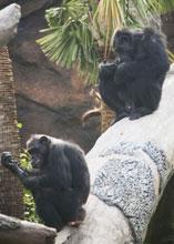 Visit the Houston Zoo