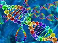 DNA Stock (web)